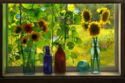 Sunflowers in Cabin Window