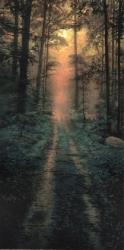 Woods at Sunrise