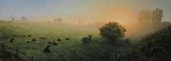Cows at Surise